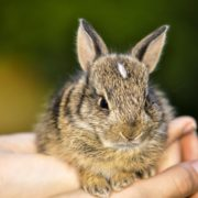 How to Prepare for Your Bunny's First Vet Visit | Hastings Veterinary Hospital
