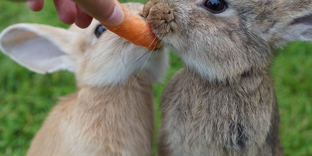 Rabbit Food: The Best and Worst Foods to Feed a Bunny | Hastings Veterinary Clinic