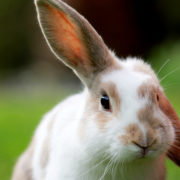Great House Training & Cage Training Tips for Rabbits  Hastings Veterinary Hospital