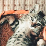 These Tips Make Litter Box Training for Kittens Easy | Hastings Veterinary Hospital