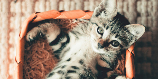 These Tips Make Litter Box Training for Kittens Easy | Hastings Veterinary Hospital