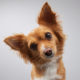 How Often Should My Dog's Ears Be Cleaned? | Hastings Veterinary Hospital