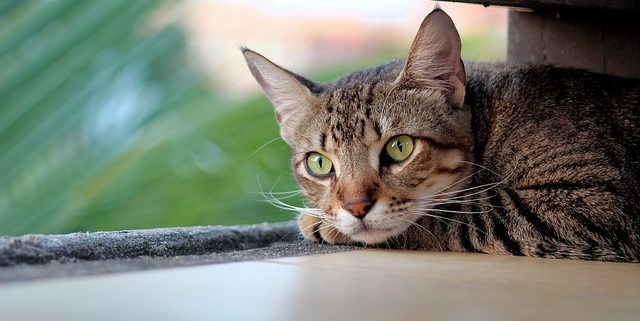 Why is My Cat Drooling & What Can I Do About It? | Hastings Veterinary Hospital