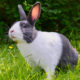 Health Benefits of Spaying or Neutering Your Pet Rabbit | Hastings Veterinary Hospital