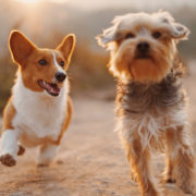 How Do I Socialize My Dog & When Should I Start? | Hastings Veterinary Hospital