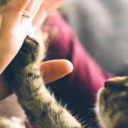 Why, When, & How Should My Cat's Nails Be Trimmed? | Hastings Veterinary Hospital