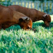 Weird Things Dogs Eat and Why | Hastings Veterinary Hospital