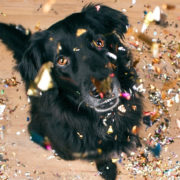 5 Useful New Year's Resolutions for Pet Owners in 2020 | Hastings Veterinary Hospital