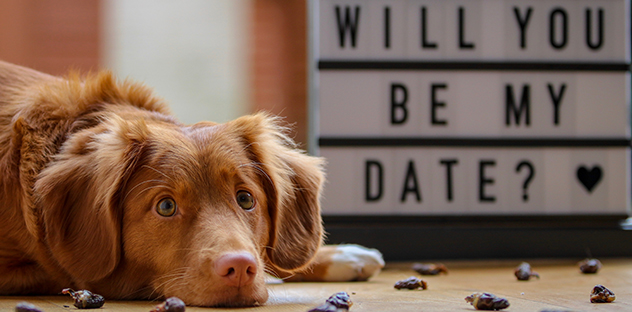 Hastings Veterinary Hospital Burnaby - Valentine's Day Safety Tips For Dogs
