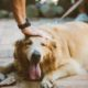 So You're a New Pet Owner and Found a Vet…What's Next? | Hastings Veterinary Hospital